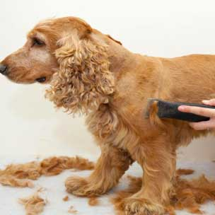 Dog Grooming License