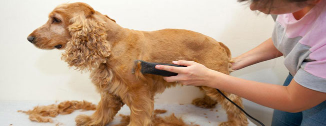 Do You Need a Dog Grooming License?